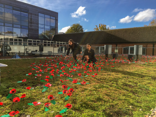 Lottie and Fran (R-L) planing poppies landscape
