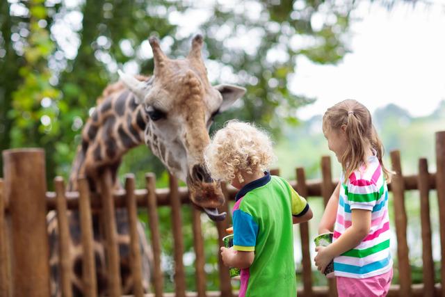 downchesterzoo_giraffe