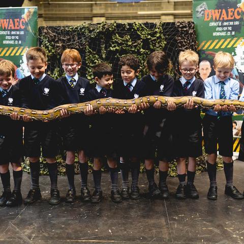 Snakes etc - Web-2
