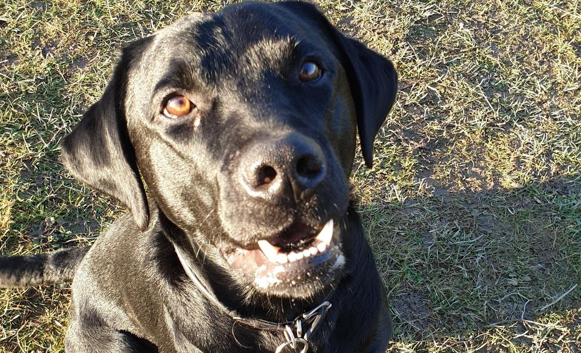 Bruce, Beechwood Park's Wellbeing Dog