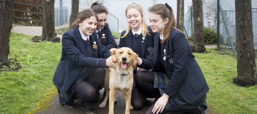 Wellbeing dogs initiative