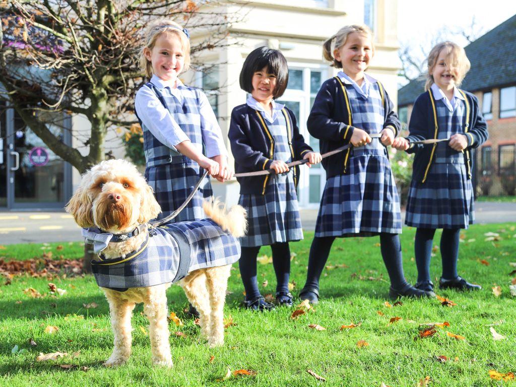 New Uniform for School Dog Jasper
