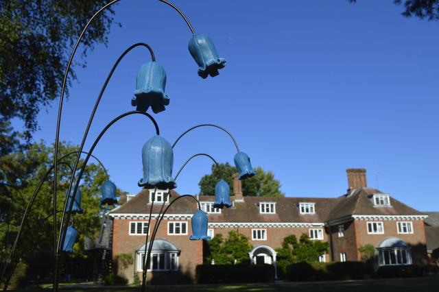 Centenary Bluebells (9)