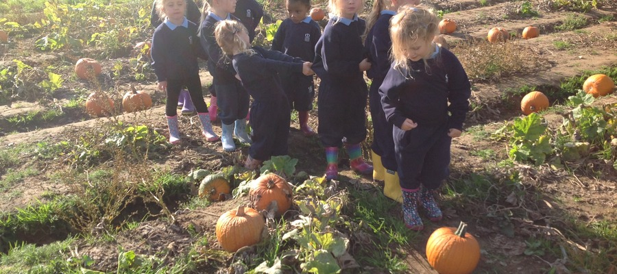 Happy and Healthy Learning at Garson's Farm