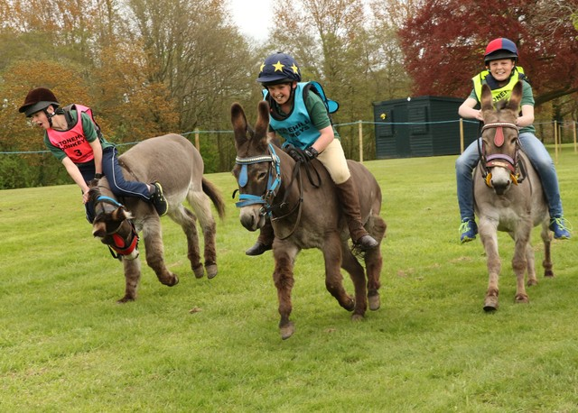 Packwood Donkeys and Fun Afternoon 0672